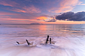 Waves crashing on tree trunks on sand beach at sunset, Antilles, Caribbean, Central America