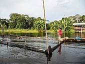Young girls gathering catfish from the family fishing pen on Rio El Dorado, Amazon Basin, Loreto, Peru, South America