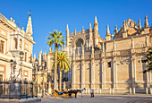 Carriage rides offered outside Seville Cathedral and the General Archive of the Indies building, UNESCO World Heritage Site, Seville, Andalusia, Spain, Europe