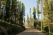USA, Utah, Uinta National Park, Road trough forest in sunny day