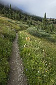 View of the Pacific Crest Trail through remote alpine meadow, autumn