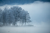 Grove of trees covered with hoarfrost on the banks of Lake Kochel, Bavaria, Germany.