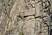 Climber in the rock faces of the Gletschhorn, Gletschhorn, Urner Alps, Uri, Switzerland