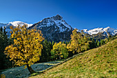 Sycamore maple in autumn leaves with gable in the background, Schwarzenbergalpe, Allgäu, Allgäu Alps, Swabia, Bavaria, Germany