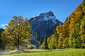 Sycamore maple in autumn leaves with gable in the background, Ostrachtal, Allgäu, Allgäu Alps, Swabia, Bavaria, Germany