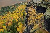 View down from Lilienstein to autumn-colored forest, Lilienstein, Saxon Switzerland National Park, Saxon Switzerland, Elbe Sandstone, Saxony, Germany