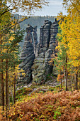 Autumnal discolored birch with rock towers in the background, Bielatal, Saxon Switzerland National Park, Saxon Switzerland, Elbe Sandstone, Saxony, Germany