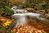 Stream with autumn leaves, Ilsetal, Brocken, Harz National Park, Harz, Saxony-Anhalt, Germany