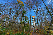 Treetop path with observation tower, Hainich National Park, Thuringia, Germany