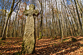 Steinernes Ihlefelder Kreuz in the forest, Hainich National Park, Thuringia, Germany