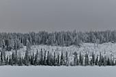 Verschneite Winterlandschaft am See in Lappland, Vilhelmina, Västerbottens Län, Schweden