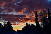 Luminous clouds in the morning sky in winter in Lapland, Storuman, Västerbottens Län, Sweden