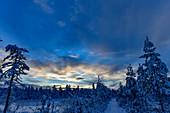 Dusk in the snow-covered forest in Lapland, Mattaur, Norrbotten, Sweden