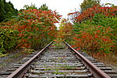 Abandoned Railroad Tracks, Quebec, Canada