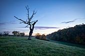 Alter Obstbaum bei Nenzenheim, Iphofen, Kitzingen, Unterfranken, Franken, Bayern, Deutschland, Europa
