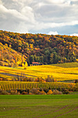 Vineyards in the southern Steigerwald, Weinparadiesscheune, Weinparadies, Bullenheim, Reusch, Middle Franconia, Franconia, Bavaria, Germany, Europe