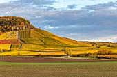 Vineyards in the southern Steigerwald, wine paradise, Bullenheim, Reusch, Middle Franconia, Franconia, Bavaria, Germany, Europe