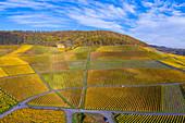 Die Weinlage Julius Echter Berg in Iphofen, Kitzingen, Unterfranken, Franken, Bayern, Deutschland, Europa