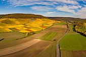 Vineyards near Iphofen, Kitzingen, Lower Franconia, Franconia, Bavaria, Germany, Europe