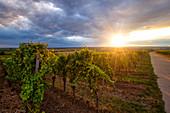 Blick aus den Weinbergen bei Rödelsee, Kitzingen, Unterfranken, Franken, Bayern, Deutschland, Europa