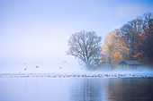 Fog on Lake Starnberg, Roseninsel, Feldafing, Bavaria, Germany