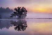 Reflecting tree in fog and sunrise, Bernried, Bavaria, Germany