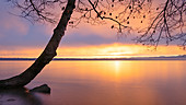 Tree on Lake Starnberg at sunrise, Tutzing, Bavaria, Germany