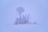 Small group of trees in winter in Kochelmoos, Kochel am See, Upper Bavaria, Bavaria, Germany
