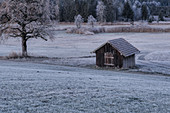 Frosty morning in the moor near Uffing, Upper Bavaria, Bavaria, Germany