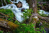 Small mountain stream in late summer, Bavaria, Germany, Europe