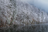 Hoar frost on the banks of the Kochelsee in November, Kochel am See, Upper Bavaria, Bavaria, Germany