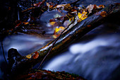 Small stream in autumn, Bavaria, Germany, Europe