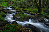 The Otterbach near Brennberg in spring, Upper Palatinate, Bavaria, Germany, Europe