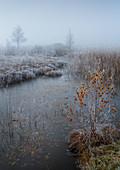 Hoarfrost morning in the moor near Kochel am See, Upper Bavaria, Bavaria, Germany, Europe