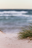 Dunes, sea and Baltic sand, Baltic Sea, Heiligenhafen, Ostholstein, Schleswig-Holstein, Germany