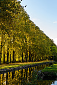 Autumn avenue of lime trees in the castle grounds of Eutin, Holstein Switzerland Nature Park, Ostholstein, Schleswig-Holstein, Germany