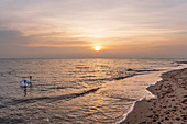 Swans in the morning on the beach in Kraksdorf, Baltic Sea, Ostholstein, Schleswig-Holstein, Germany