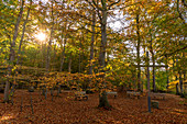View of the place of the farewell ceremony in the mourning forest at the Eitz in Weissenhäuser Strand, Baltic Sea, Ostholstein, Schleswig-Holstein, Germany