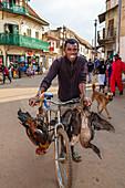 Man transports poultry by bicycle, tribe of the Betsileo, Ambalavao, Fianarantsoa Region, Madagascar, Africa