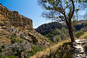 Isalo National Park near Ranohira, Ihorombe Region, Southern Madagascar, Africa