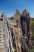 Karst landscape Tsingy de Bemaraha, Tsingy-de-Bemaraha National Park, suspension bridge, Mahajanga, Madagascar, Africa