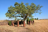 Gambia; Central River Region; Stone circles near Wassu; consisting of about 200 megaliths