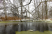 Snow river landscape in the Spreewald at thaw, Germany, Brandenburg, Spreewald