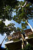 View from below of modern, treetop bungalows in the jungle. Borneo, Indonesia.