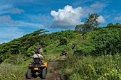 People on an excursion with a quad off-road vehicle on a dirt road through lush mountain vegetation, Bora Bora, Leeward Islands, French Polynesia, South Pacific