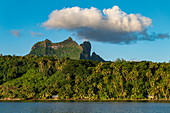 Coconut palms along Bora Bora Lagoon with Mount Otemanu and cloud behind, Bora Bora, Leeward Islands, French Polynesia, South Pacific