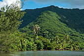 Coconut trees along the Moorea lagoon with lush vegetation and mountain, Moorea, Windward Islands, French Polynesia, South Pacific