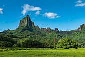 Lush vegetation and Mount Tohivea, Moorea, Windward Islands, French Polynesia, South Pacific