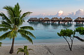 Coconut palms on the beach and overwater bungalows at the Hilton Moorea Lagoon Resort & Spa, Moorea, Windward Islands, French Polynesia, South Pacific