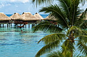 Coconut palm and overwater bungalows at the Hilton Moorea Lagoon Resort & Spa, Moorea, Windward Islands, French Polynesia, South Pacific